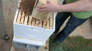 Starting new bee hive