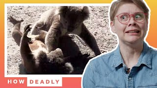 Koalas Are Loud Angry Lovers, But Are They Dangerous? | REACTION