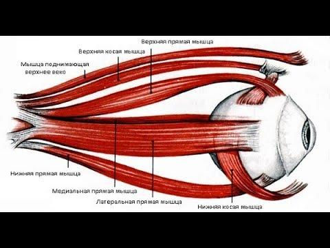 Лазерная коррекция зрения показание к кесареву сечению