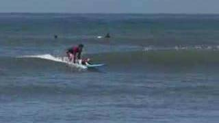 Lord Of Dogtown: Buddy, The Amazing Surfing Dog