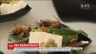 Вчені привчають поляків їсти жуків