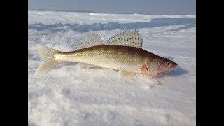 Эхолоты для рыбалки в новосибирске