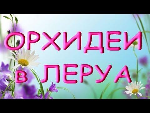 """ЛЕРУА:самые разные ОРХИДЕИ!05.10.19,Самара,ТЦ""""Космопорт""""."""
