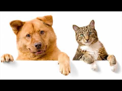 Межвидовая дружба животных (рассказывает биолог Елена Федорович)