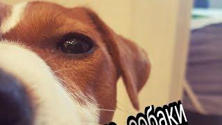 Караоке собаки, Майли поёт песню ( oh No)