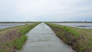 Рыбалка в краснодарском крае на рисовых чеках