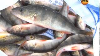 Рыбалка великие луки в контакте
