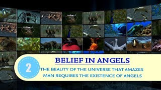Belief in Angels #2