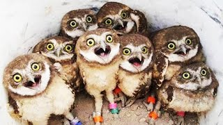 Owl - Cute and Funny Owls 2020 [Funny Pets]