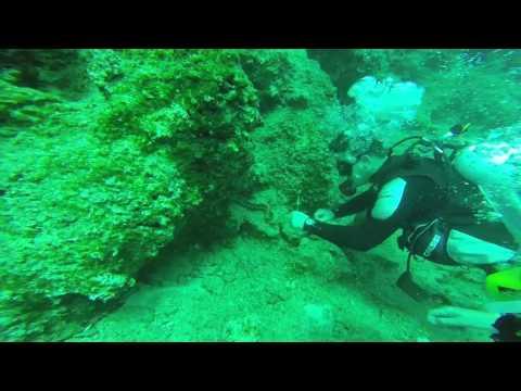 Spektakulär! Taucher versucht einer Muräne zu helfen - Die Muränen Rettungsaktion im Video
