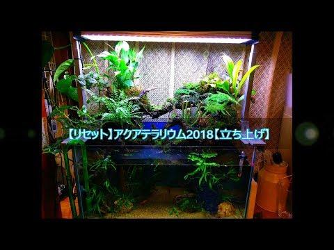 【リセット】アクアテラリウム2018.8【立ち上げ】