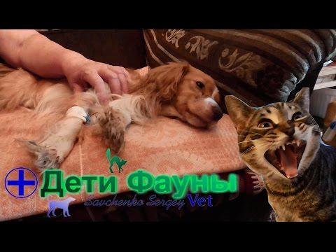 Лечение энтерита у собак. Советы ветеринара