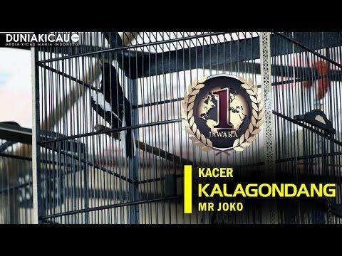 JAWARA - Kacer Kalagondang Menggila Dengan Menyabet Double Winner