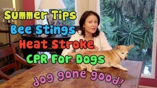 Bee Stings, Natural Light, Heat Stroke and CPR for Dogs (Summer Tips) - Dog Gone Good