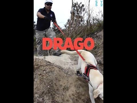 Esta es la historia de Drago, el perro que iba viajar a México