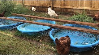 Will This Idea Work? + Getting Rid of ROOSTERS!