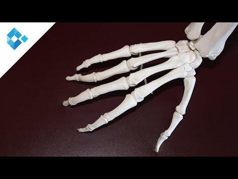 Das Ekzem der Handfläche der Grund