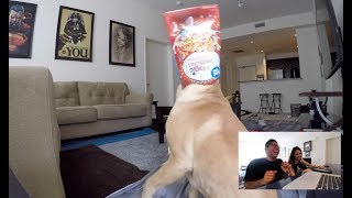LEFT MY DOG HOME ALONE AND RECORDED WHAT HE DID!!!! (HILARIOUS)