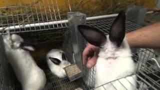 Разделка и подготовка кролика к продаже - Смотреть интересное видео с YouTube