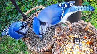 Relax Your Pet | Weekend Bird Feeder Videos For Cats and Dogs | They Watch While You're Away