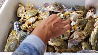 ซื้อปูม้า ปูทะเล สดๆ เป็นๆ ต้องแบบนี้ ปูม้าอ็อกซิเจน.แหล่งปูม้าปูเป็นราคาถูก Crab