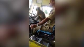 Ein Affe fährt Bus