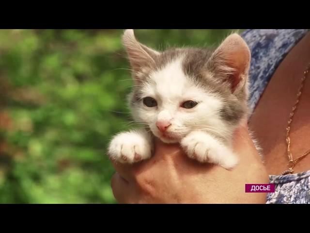 Полмиллиона рублей выделили ангарским зоозащитникам