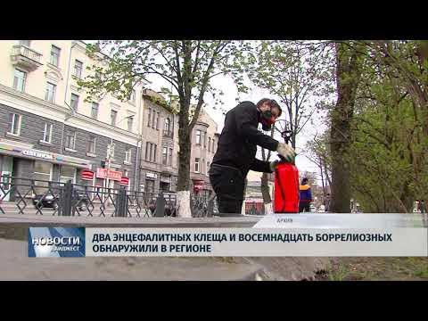 Новости Псков 19.07.2018 # Два энцефалитных клеща и восемнадцать боррелиозных обнаружили в регионе