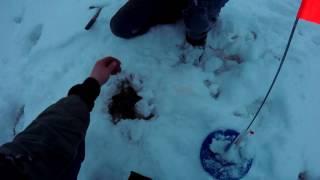 Зимняя рыбалка на кружки