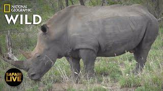 Safari Live - Day 341   Nat Geo Wild