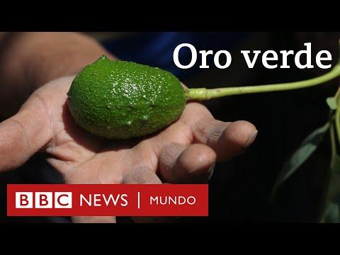 """¿Agua o aguacates? El conflicto por la palta, el """"oro verde"""" de Chile"""