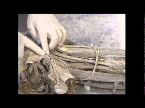 Pęcherz moczowy, prostata i męska cewka moczowa