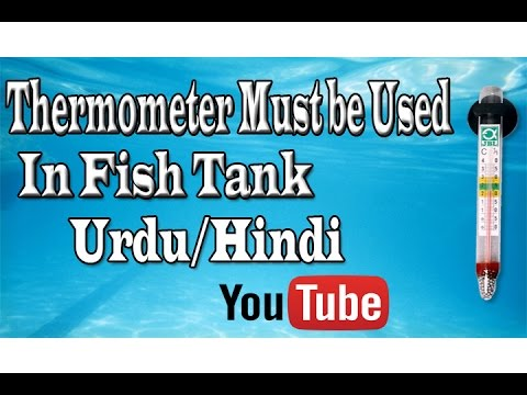 Thermometer Must Be Used in Fish Tank Urdu/Hindi