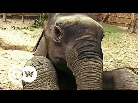 Saving baby elephants in India | DW English
