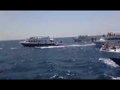 Hurghada: Brutale Delfinhetzjagden im Roten Meer beim Schwimmen mit Delfinen