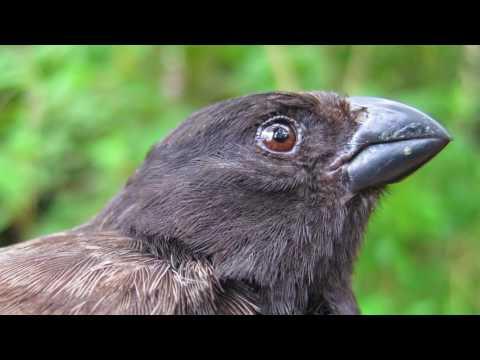 Erasmus Darwin – The Evolution of Evolution | David Rives