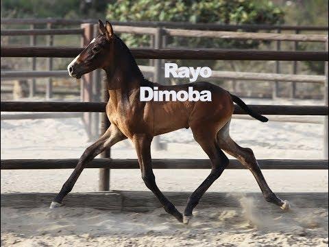 Rayo Dimoba (Publicado 11-7-2018)