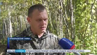 В Прокопьевском районе появилось 3.500 сосен