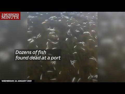 Dozens of fish found dead at a port