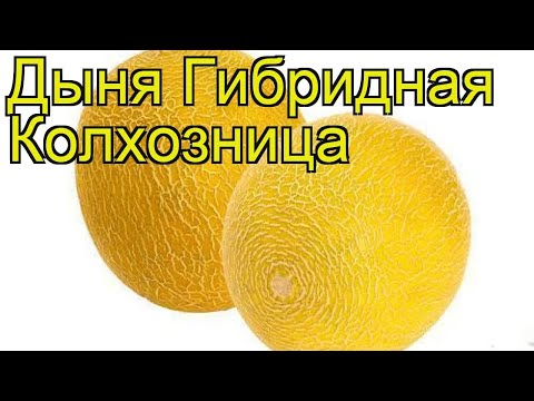 Дыня гибридная Колхозница. Краткий обзор, описание характеристик Kolhoznitca