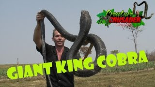 Top 10 Dangerous Animals in the World KING COBRA -SNAKE DUDE on YouTUBE Awesome AnimalsTV! ULAR RAJA