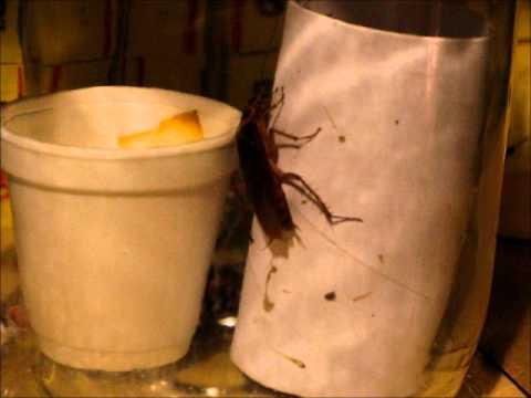 Techline desarrollo de todo para insectos
