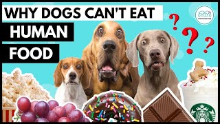 Most DANGEROUS food for dogs. NEVER give these human foods to your dog or puppy.