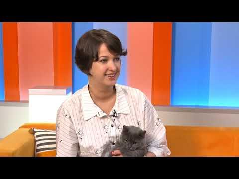 Британская кошка с эпилепсией. Как лечить?