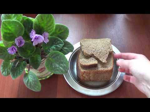 Хлебная подкормка для растений.