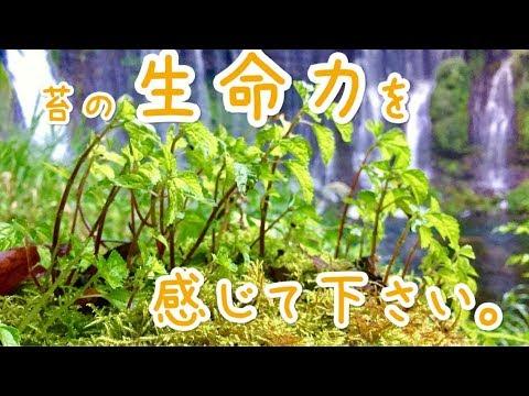 苔の生息地に行ってきました♪♪ 新しい生体お迎え♪♪