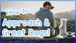 How to Approach and Greet a Dog! Tips on Safely Saying Hello to Dogs!
