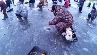 Рыбалка в чувашии и марий эл на волге