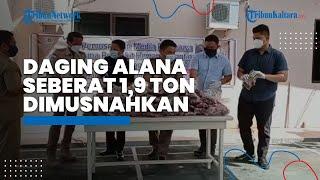 Perdana di Tahun 2021, BKP Tarakan Musnahkan Daging Alana 1,9 Ton