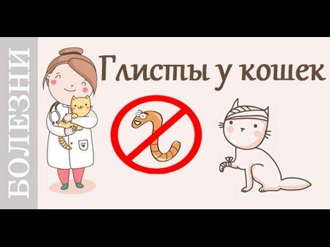 Коды на паразит ева 2